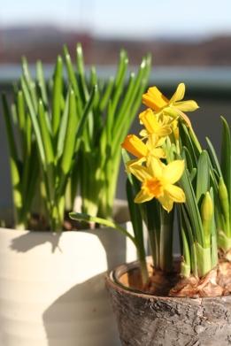 Våren er på vei!