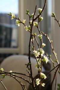 Vårsprett